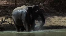 Elephant Bathes In Waterhole, Trunk Swinging To And Fro Spouting Water Over Body