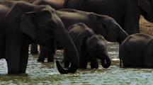 Group Of Elephants Bathing And Drinking