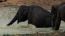 Two Elephants Wade Into Water And Lie Down