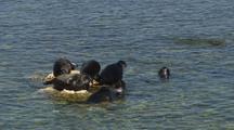 Seals Sunbathing On Rocks