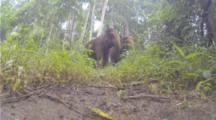 Asian Elephants Walk Toward Camera On Ground And Splash It From Very Close