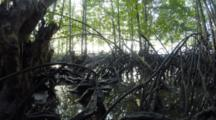 Time Lapse, Tidal Flow In Mangrove At Water Level