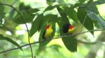 Stock Footage from Tropical Habitats