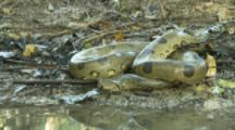 Python On Shore Of River