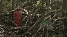 People Travel In Mangrove Forest To Collect Shipworms Known As Tamilok