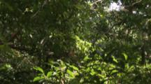 Squirrel Monkey high up in tree In Jungle