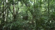 Indigenous People Walk through Amazon Forest
