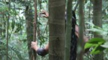 Indigenous People Walk through Amazon Forest,two men examine tree