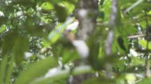 Bird,Possibly Woodpecker On Tree Trunk Covered In Ants,Possibly Army Ants