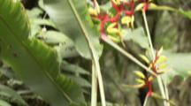 Flowers Similar To Bird Of Paradise