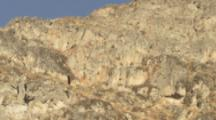 Andean Condor Flies Over Mountains In Peru