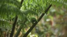 Glistening-Green Tanager On Fern In Rain