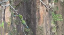 Two Parrots, Possibly Blue-Winged Macaws, Interact On Branch