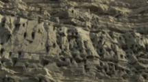 Zoom in to pairs of Burrowing Parrots Nesting On Cliff