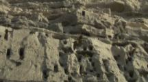 Burrowing Parrots hover in front of nesting Cliffs