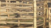 Gauchos Train Horses At Ranch