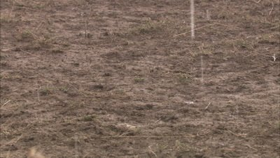rain starting, first drops on dusty ground