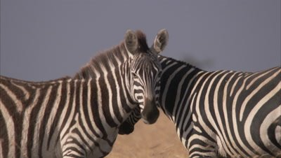 All African Wildlife Stock Footage