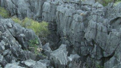 Lemurs Sits On Rocks