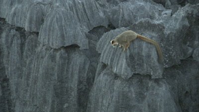 Lemurs Sitting On Rock