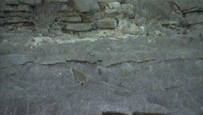 Lemurs Walking On Rocks