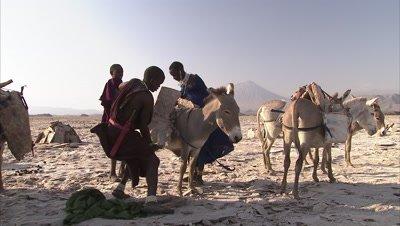 Masaai Loading Soda Slabs On Their Donkeys