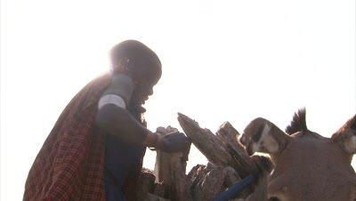 Masaai Woman Loading Soda Slabs On Their Donkeys