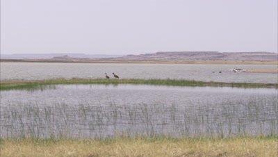 Various Birds Perching In Water