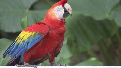 Brazil Bird Stock Footage