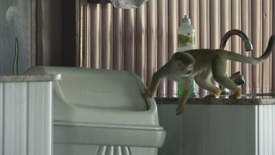 Mischievous Squirrel Monkey at Play Around Hotel Grounds, Goes in and out of garbage can