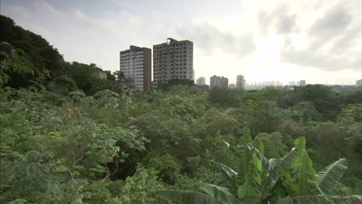 View of City Skyline Beyond Trees