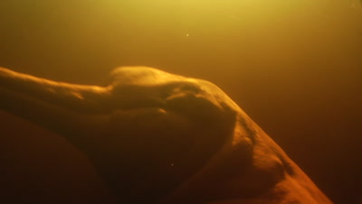 Amazon River Dolphin, Underwater, Close up