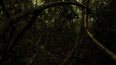 Time Lapse, Shadows Move Across Floor of Dense, Dark Rainforest