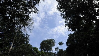 Time Lapse, Looking up at Clouds Moving Above Rainforest