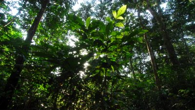 Time Lapse, Shadows, Sunlight Move Over Dense, Dark Rainforest