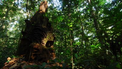Time Lapse, Shadows Move Across Floor and tree Trunk in Dense, Dark Rainforest