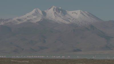 Greater Flamingos In Sultan Marsh, Mt Erciyes in Background
