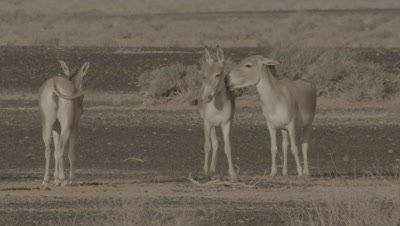 Onagers Standing,Interacting In Dessert