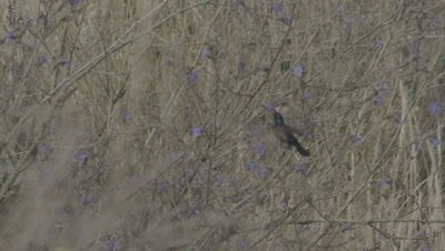 Sunbird Feeding On Nectar And Pollinating Flower