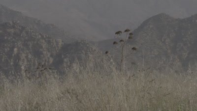 Desert Mountains,Grass and Agave Plant