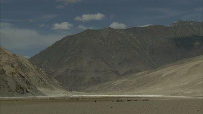 Very Wide View,Shepherd Walking With Pashmina Goats in Mountainous Landscape
