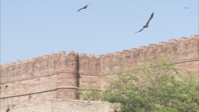 Bird of prey,Possibly Black Kite but known as hawks,fly above Mehrangarh Fort