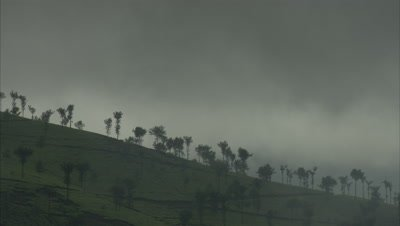 Mist Moves over Forested Hills,possibly coffee crop