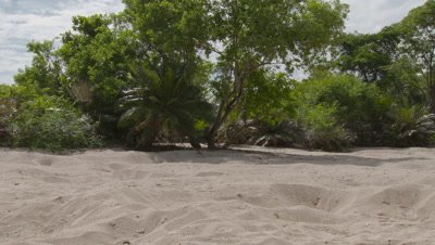 Empty Maleo nests on sandy beach