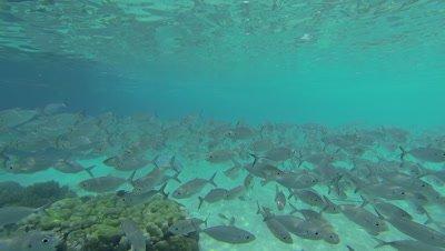 Shoal of fish in shallow waters of Wayag bay, Raja Ampat
