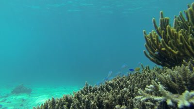 Fish moving amongst coral garden in shallow waters of Wayag bay
