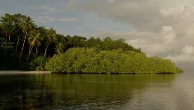 Tropical beach landscape; water shimmers next to lush green mangroves