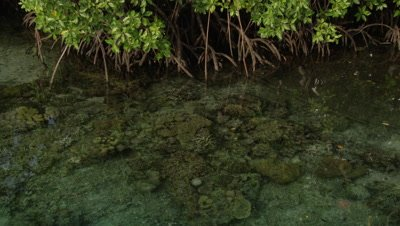 Crystal clear water covers sandy coral in shallow water by mangroves