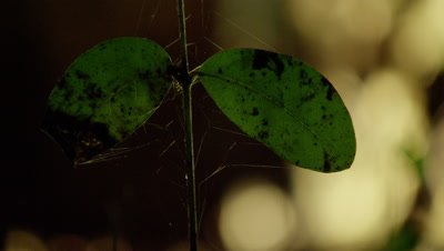 Close up of spiderweb on seedling leaves