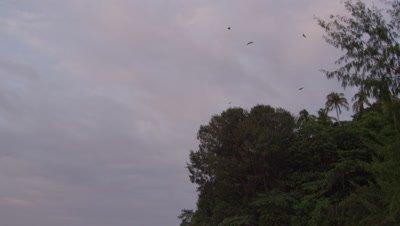 Bats flying from tree canopy